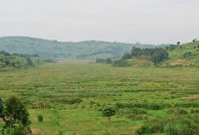 rugezi marsh