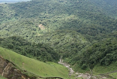 mukura forest